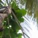 Ceylon-tok-Sri-Lanka-Grey-hornbill-03