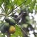 Ceylon-tok-Sri-Lanka-Grey-hornbill-08