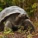 galapagos-reuzenschildpad-galapagos-giant-tortoise-03