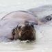 galapagos-zeeleeuw-galapagos-sea-lion-01