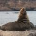 galapagos-zeeleeuw-galapagos-sea-lion-15