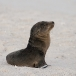 galapagos-zeeleeuw-galapagos-sea-lion-18