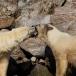 ijsbeer-polar-bear-11