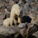 ijsbeer-polar-bear-12