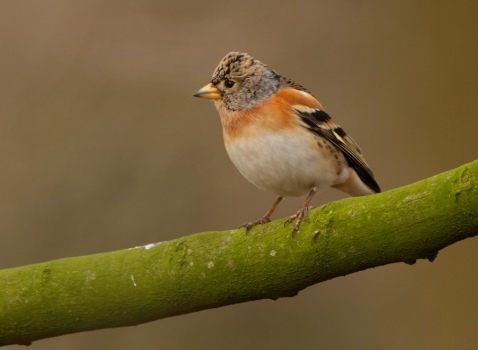 keep-brambling-01