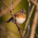 keep-brambling-02