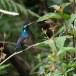 Lotens-honingzuiger-Lotens-sunbird-01