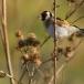 putter-goldfinch-07