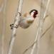 putter-goldfinch-15