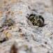 Ruigpootuil-Boreal-Owl-04