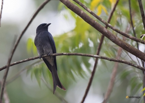 Sri-Lanka-20181127-03
