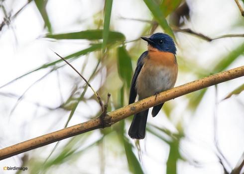Sri-Lanka-20181128-03