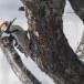 Witrugspecht -  White-backed woodpecker 02
