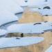 Zwarte waerspreeuw -  Brown dipper 11
